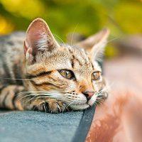 Gatto in attesa dati